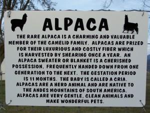 Alpaca explanation