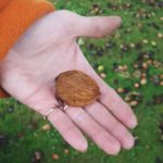 3-walnuts